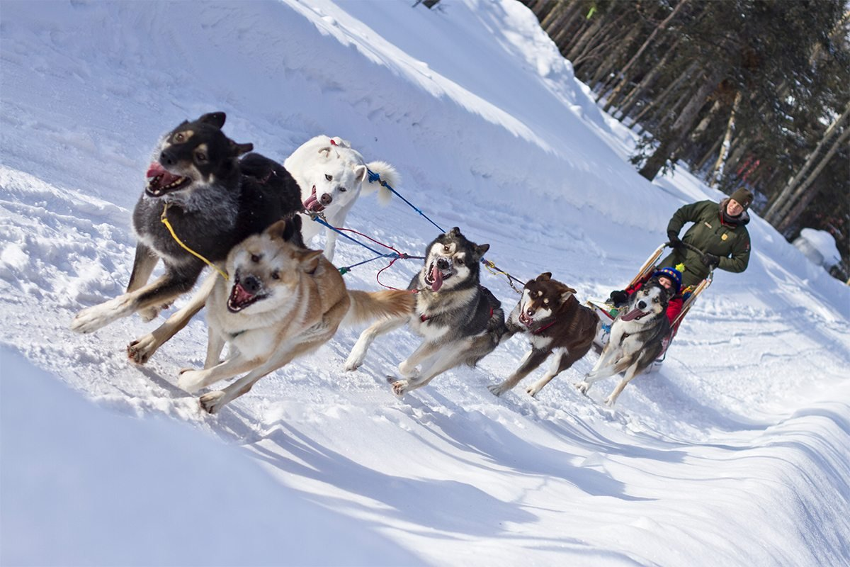 Dogsled Trips